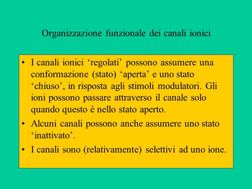 Organizzazione funzionale dei canali ionici