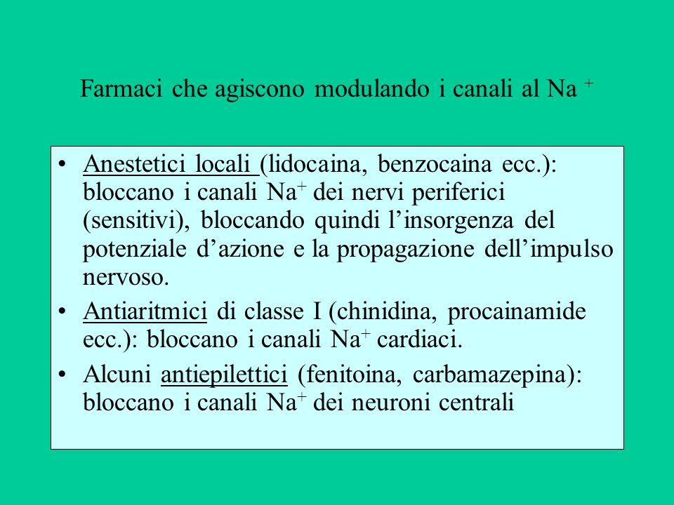 Farmaci che agiscono modulando i canali al Na +