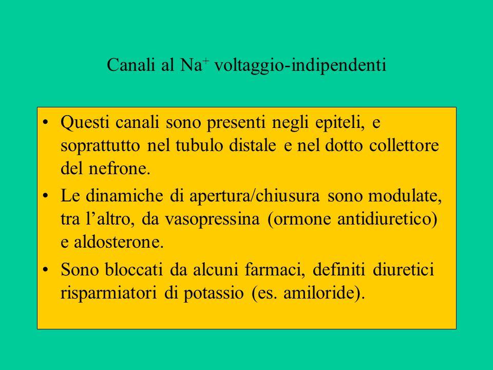 Canali al Na+ voltaggio-indipendenti