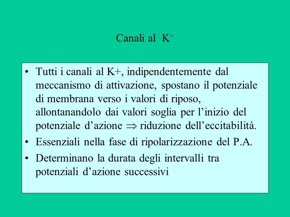 Canali al K+