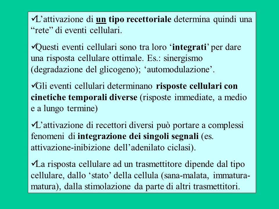 L'attivazione di un tipo recettoriale determina quindi una rete di eventi cellulari.