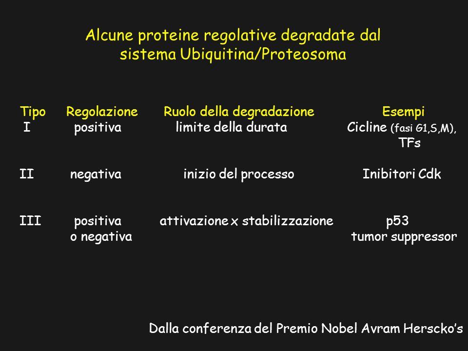 Alcune proteine regolative degradate dal sistema Ubiquitina/Proteosoma