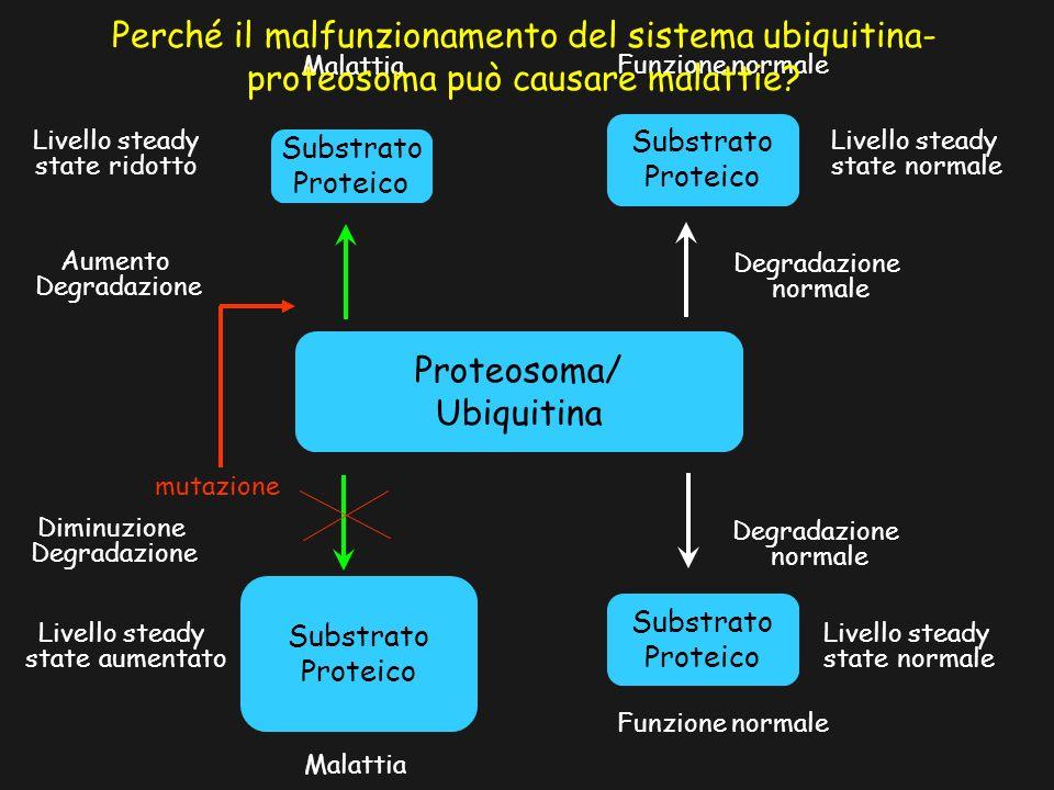 Perché il malfunzionamento del sistema ubiquitina-proteosoma può causare malattie