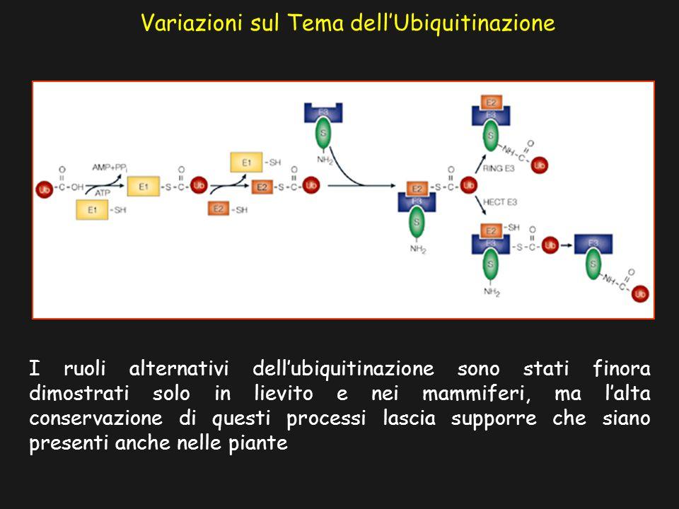 Variazioni sul Tema dell'Ubiquitinazione