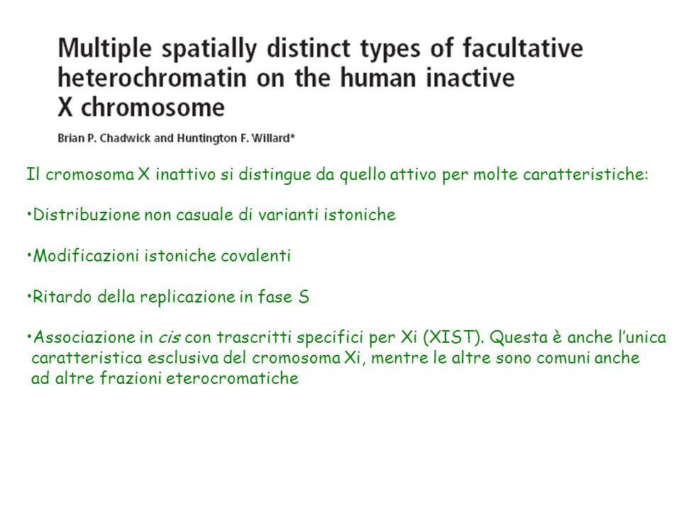 Il cromosoma X inattivo si distingue da quello attivo per molte caratteristiche: