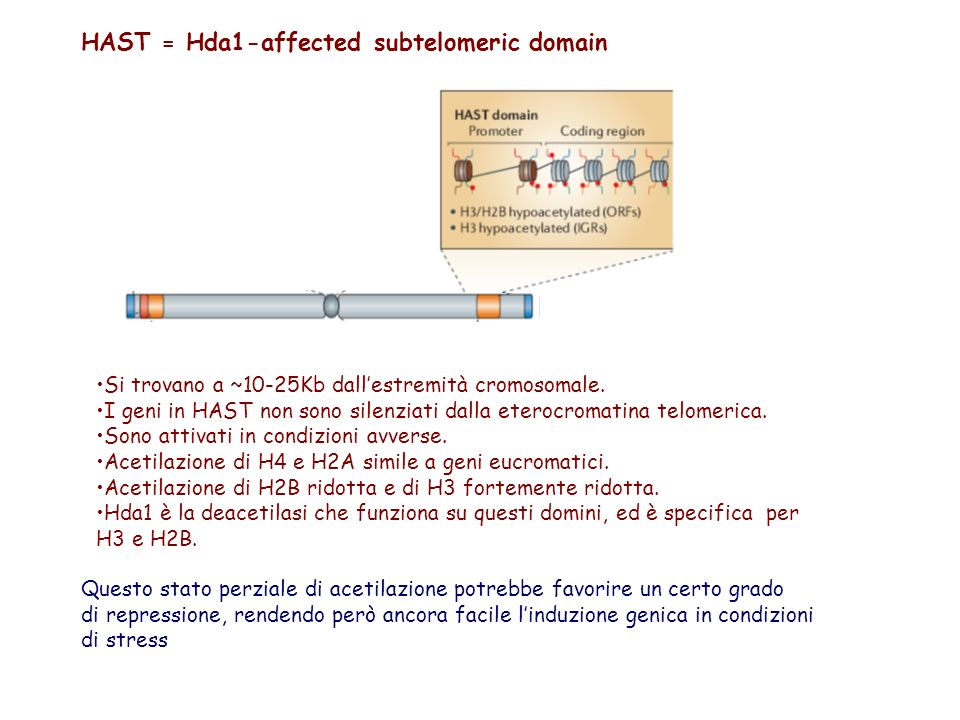 HAST = Hda1-affected subtelomeric domain