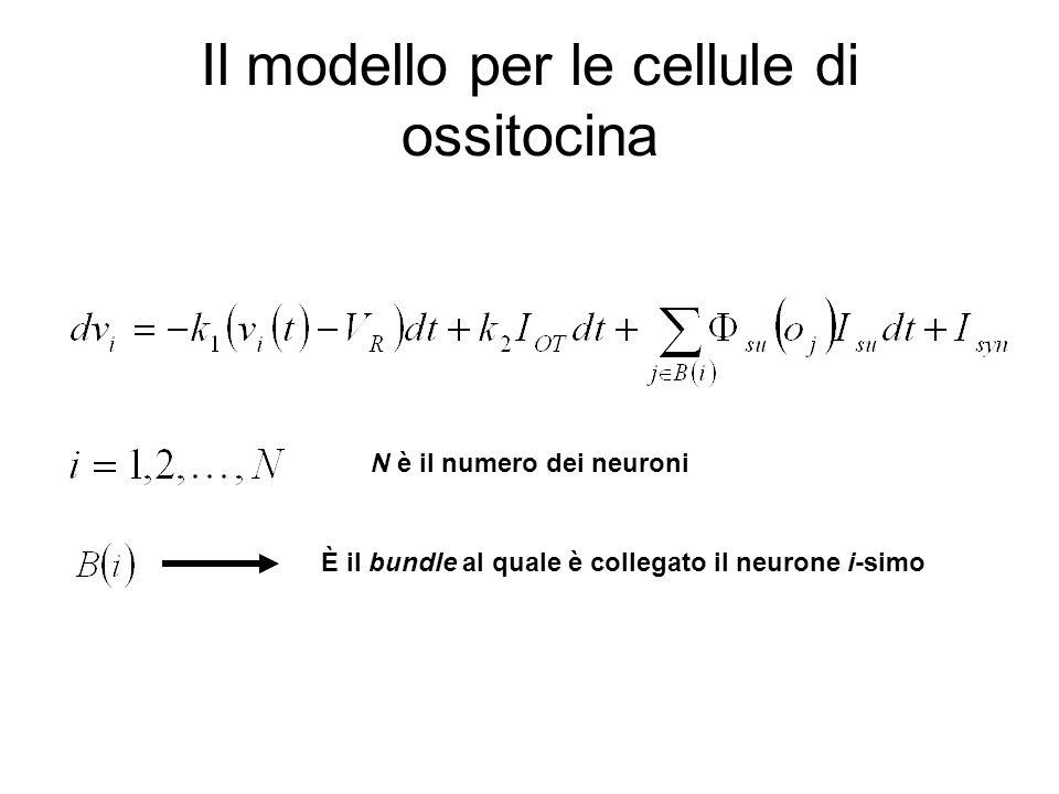 Il modello per le cellule di ossitocina