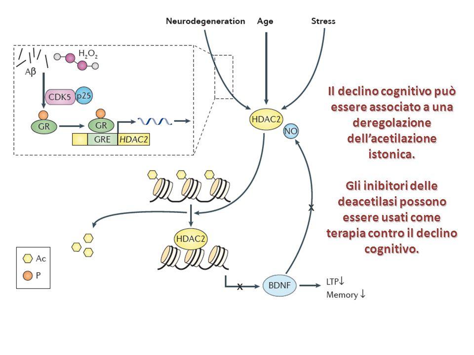 Il declino cognitivo può essere associato a una deregolazione dell'acetilazione istonica.