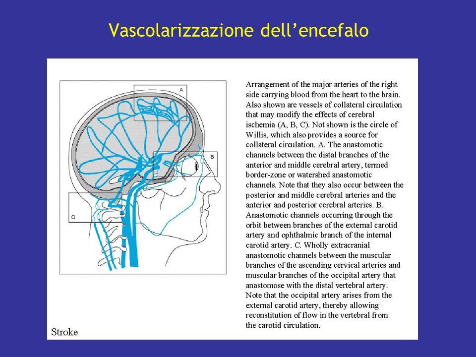 Vascolarizzazione dell'encefalo
