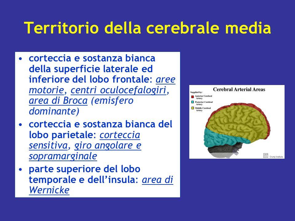 Territorio della cerebrale media
