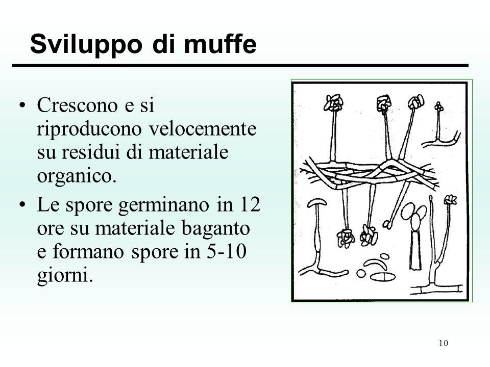 Sviluppo di muffe Crescono e si riproducono velocemente su residui di materiale organico.