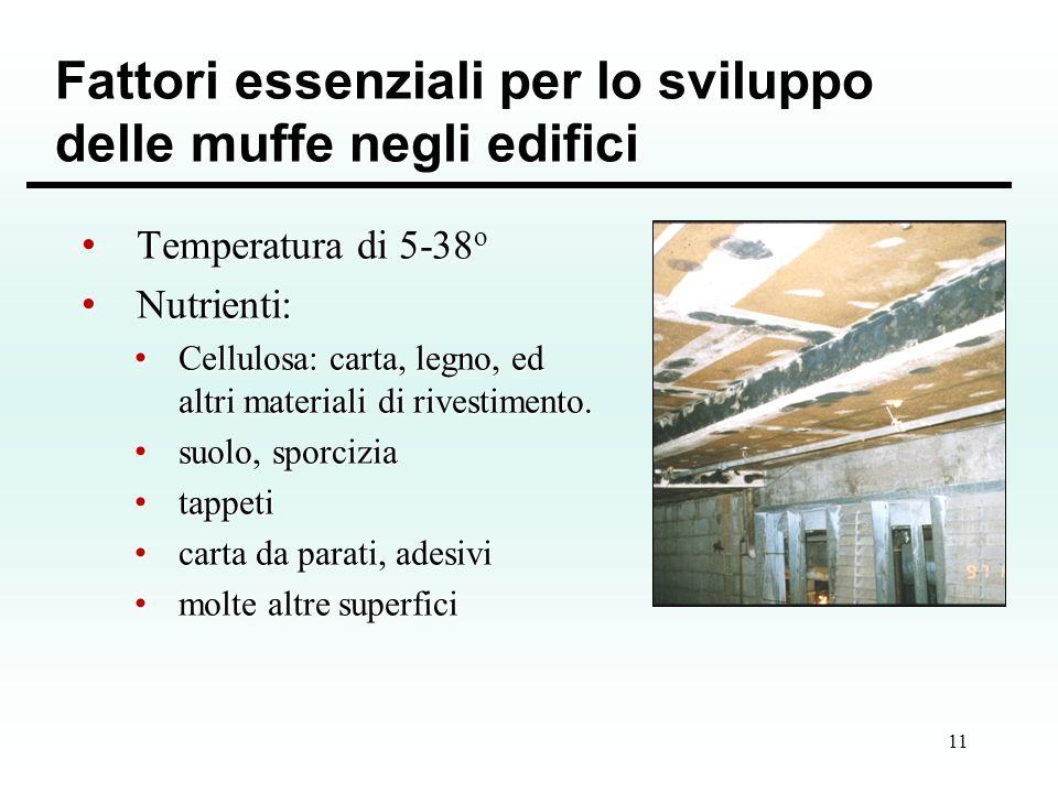 Fattori essenziali per lo sviluppo delle muffe negli edifici