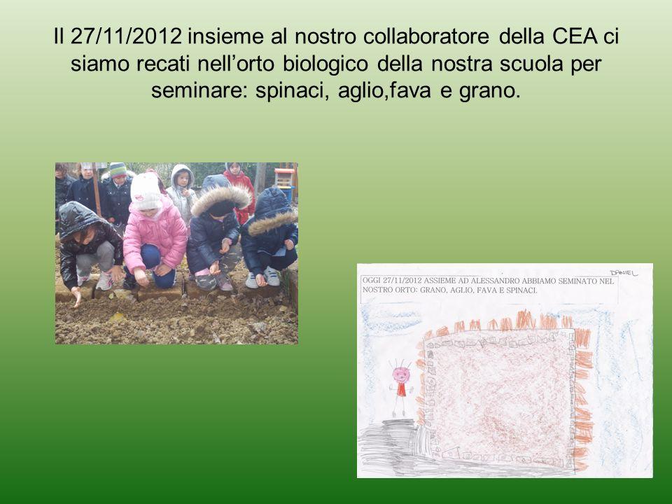 Il 27/11/2012 insieme al nostro collaboratore della CEA ci siamo recati nell'orto biologico della nostra scuola per seminare: spinaci, aglio,fava e grano.