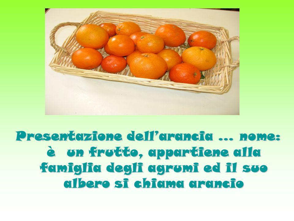 Presentazione dell'arancia … nome: è un frutto, appartiene alla famiglia degli agrumi ed il suo albero si chiama arancio