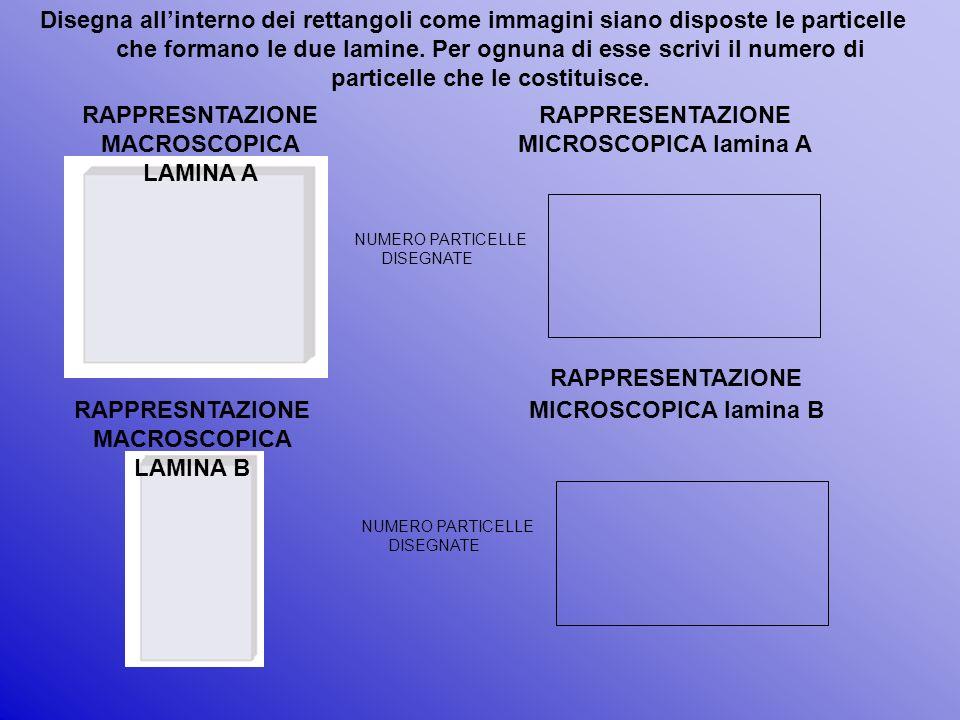 RAPPRESNTAZIONE MACROSCOPICA LAMINA A