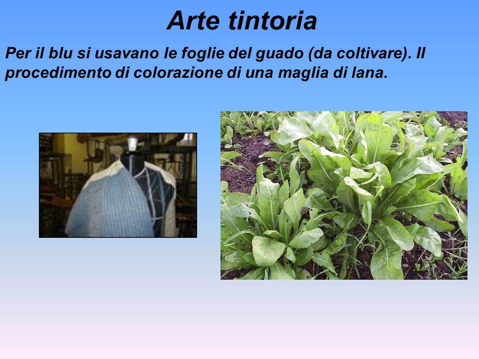 Arte tintoria Per il blu si usavano le foglie del guado (da coltivare).