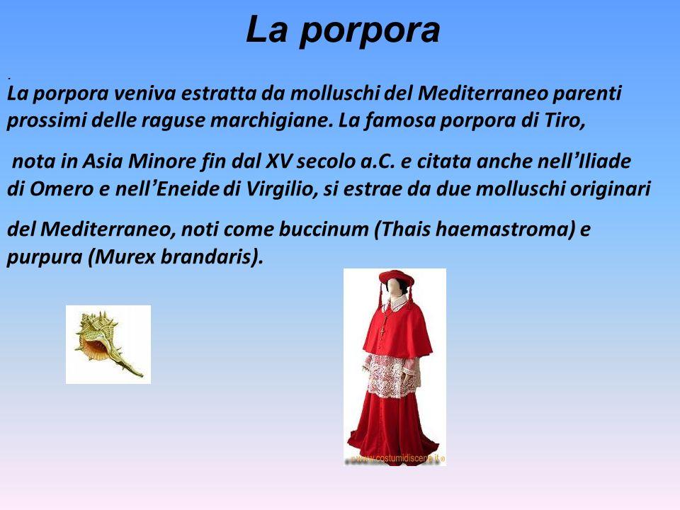 La porpora . La porpora veniva estratta da molluschi del Mediterraneo parenti prossimi delle raguse marchigiane. La famosa porpora di Tiro,