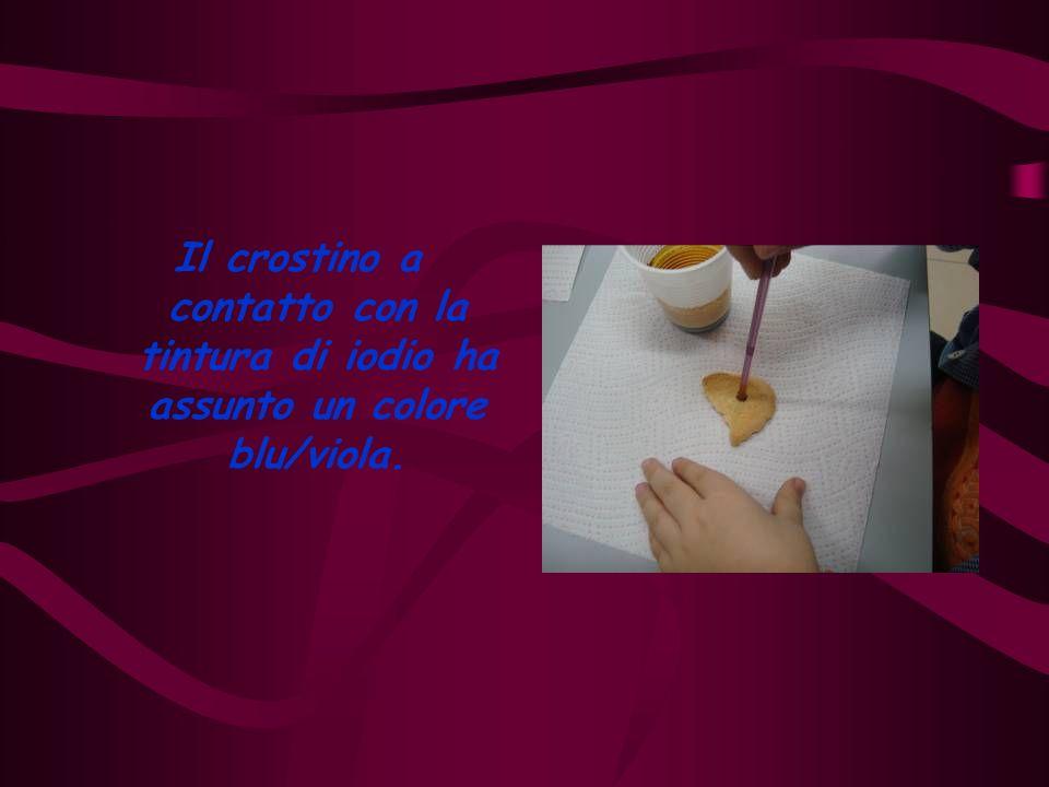 Il crostino a contatto con la tintura di iodio ha assunto un colore blu/viola.