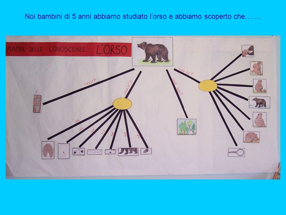 Noi bambini di 5 anni abbiamo studiato l'orso e abbiamo scoperto che…….
