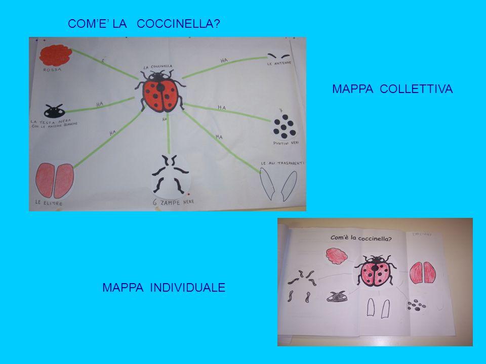 COM'E' LA COCCINELLA MAPPA COLLETTIVA MAPPA INDIVIDUALE