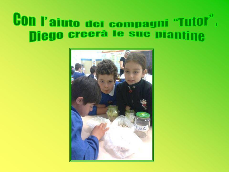Con l' aiuto dei compagni Tutor , Diego creerà le sue piantine