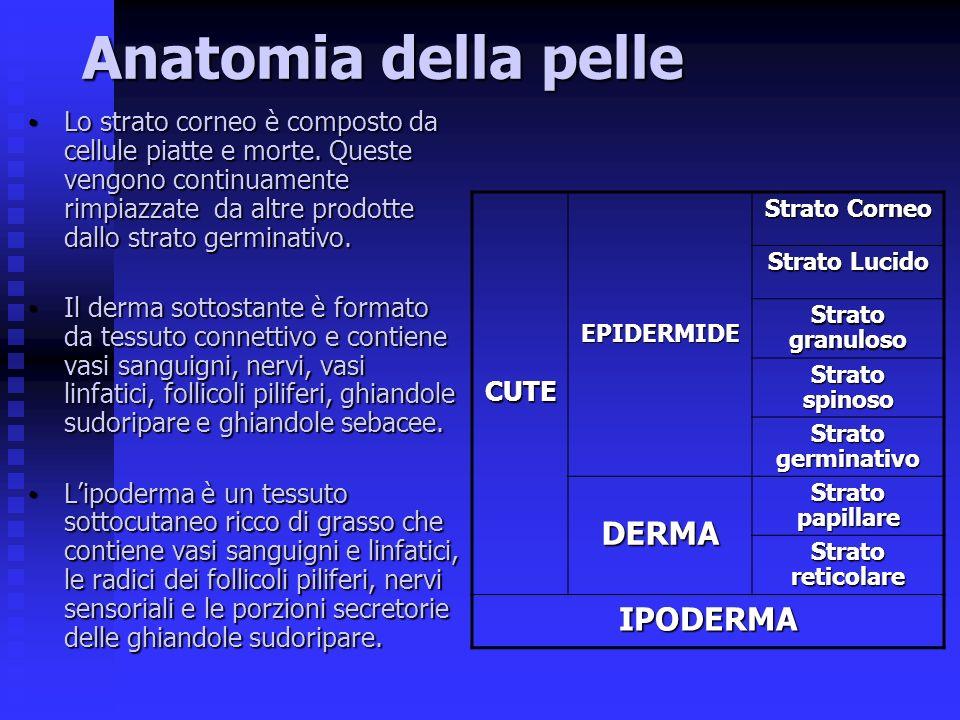 Anatomia della pelle DERMA IPODERMA CUTE