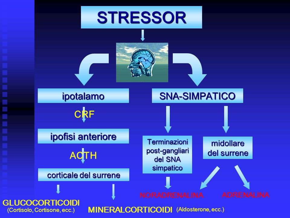 STRESSOR ipotalamo SNA-SIMPATICO CRF ipofisi anteriore ACTH