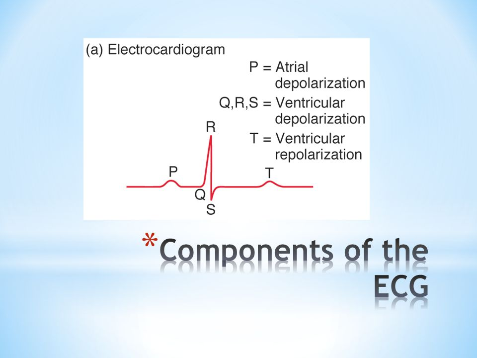 Components of the ECG ECG = electrocardiogram