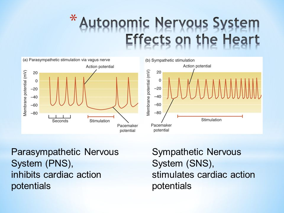 Autonomic Nervous System Effects on the Heart