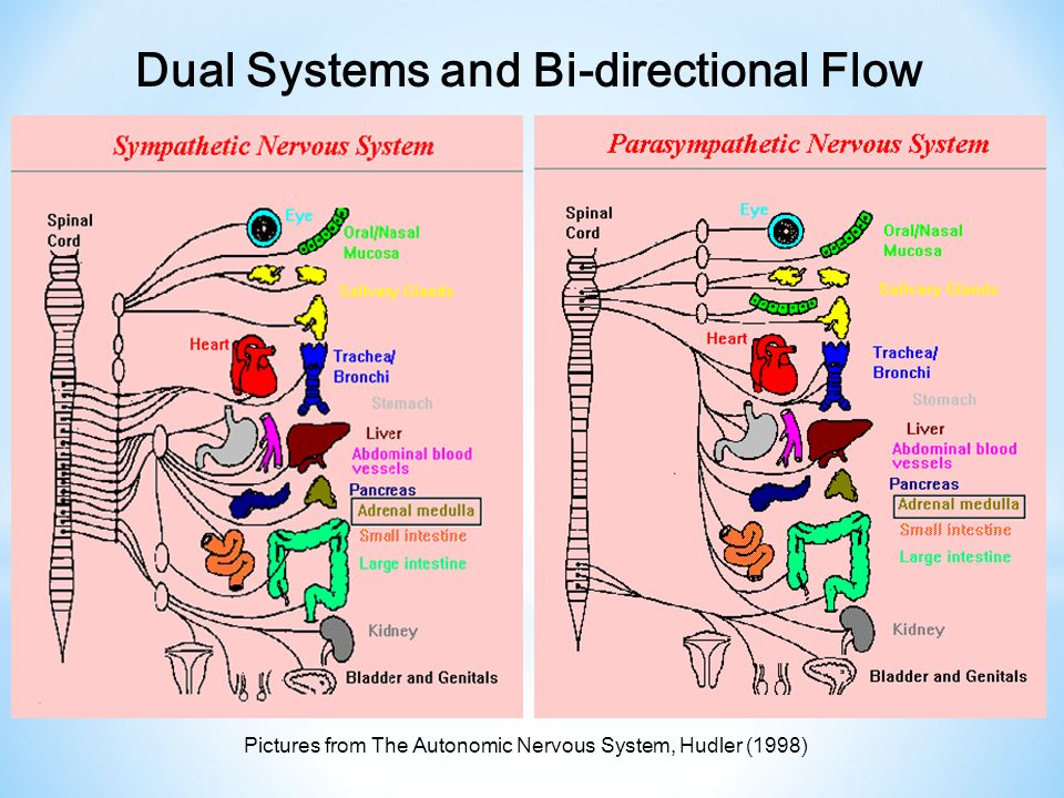 Dual Systems and Bi-directional Flow