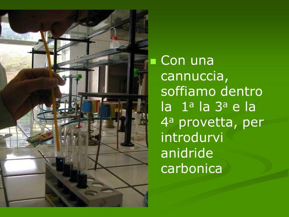 Con una cannuccia, soffiamo dentro la 1a la 3a e la 4a provetta, per introdurvi anidride carbonica