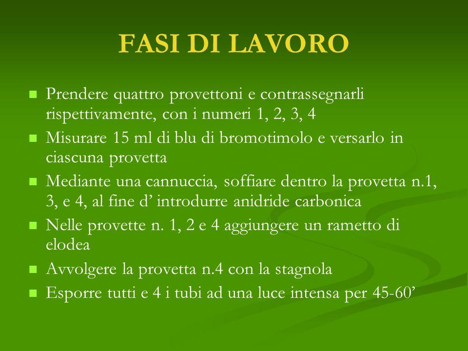 FASI DI LAVORO Prendere quattro provettoni e contrassegnarli rispettivamente, con i numeri 1, 2, 3, 4.