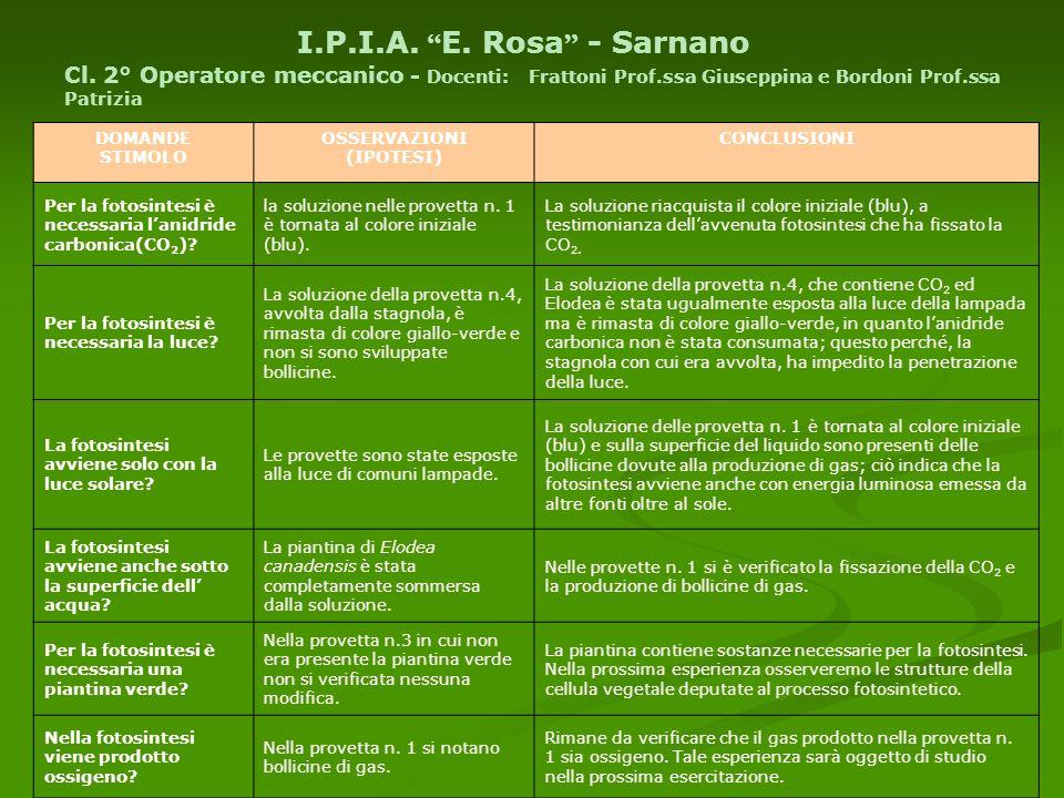 I. P. I. A. E. Rosa - Sarnano Cl