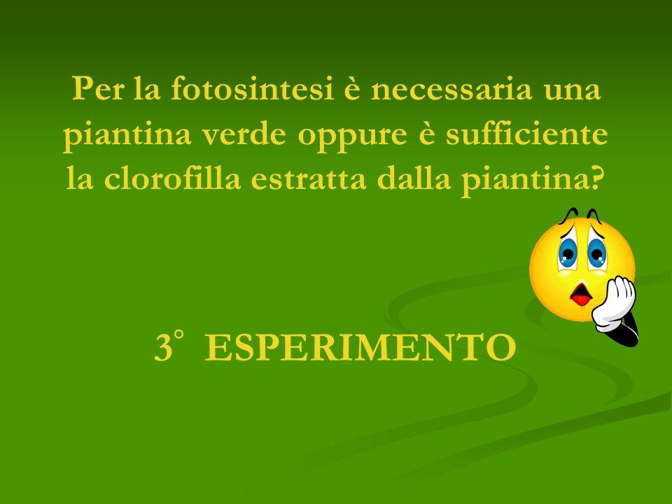 Per la fotosintesi è necessaria una piantina verde oppure è sufficiente la clorofilla estratta dalla piantina
