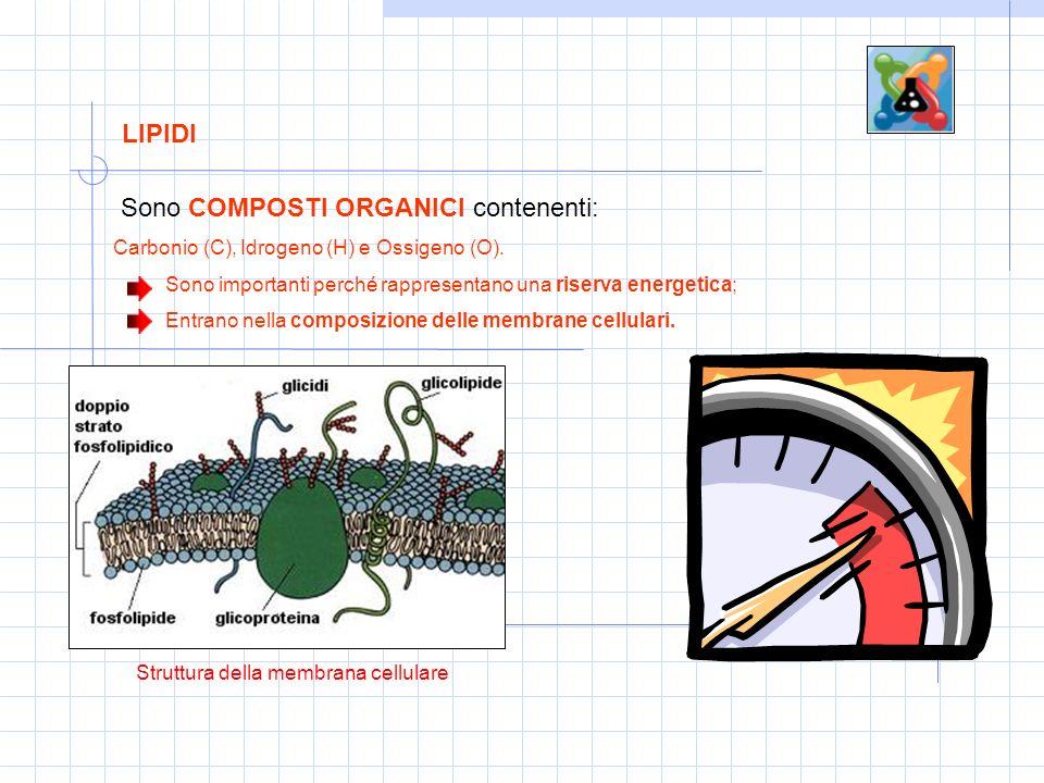 Struttura della membrana cellulare