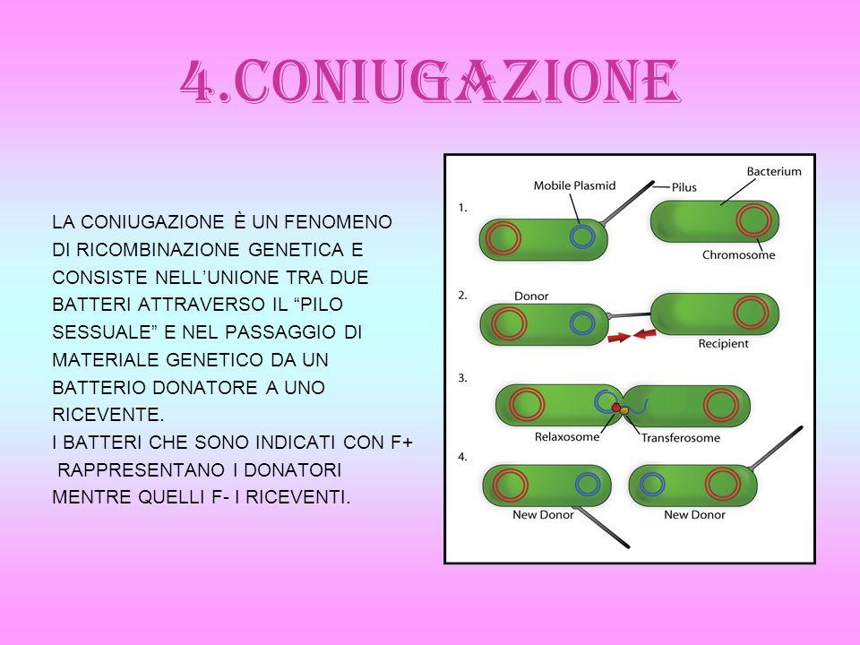 4.CONIUGAZIONE LA CONIUGAZIONE È UN FENOMENO