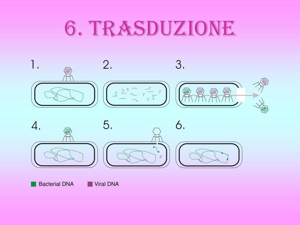 6. TRASDUZIONE