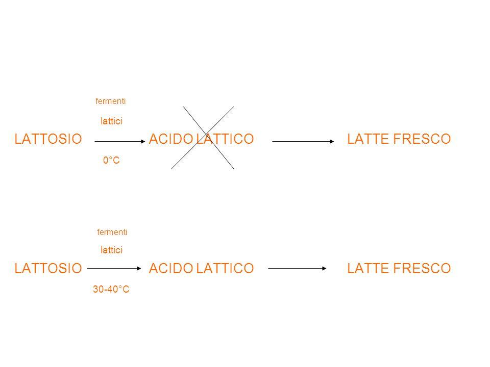 fermenti lattici. LATTOSIO ACIDO LATTICO LATTE FRESCO. 0°C.