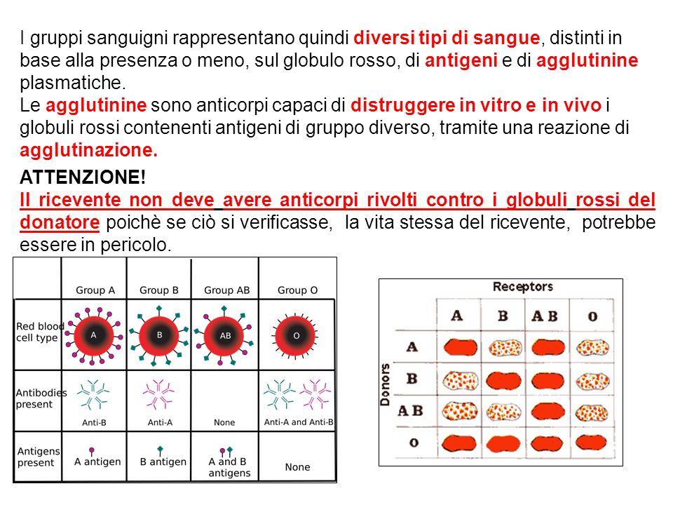 I gruppi sanguigni rappresentano quindi diversi tipi di sangue, distinti in base alla presenza o meno, sul globulo rosso, di antigeni e di agglutinine plasmatiche. Le agglutinine sono anticorpi capaci di distruggere in vitro e in vivo i globuli rossi contenenti antigeni di gruppo diverso, tramite una reazione di agglutinazione. .