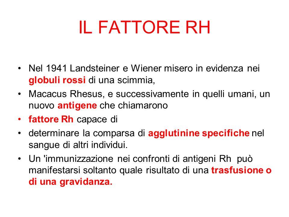 IL FATTORE RH Nel 1941 Landsteiner e Wiener misero in evidenza nei globuli rossi di una scimmia,