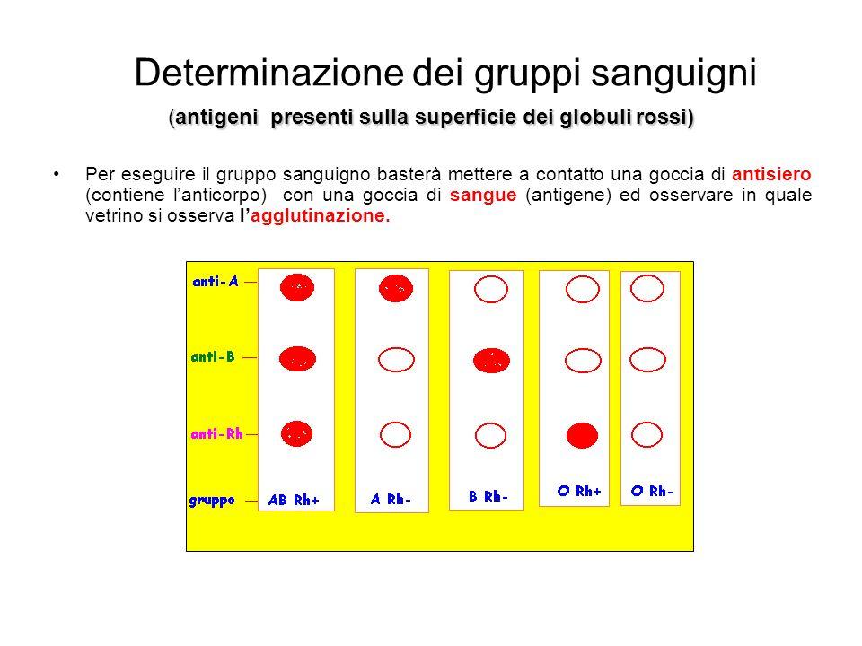 Determinazione dei gruppi sanguigni