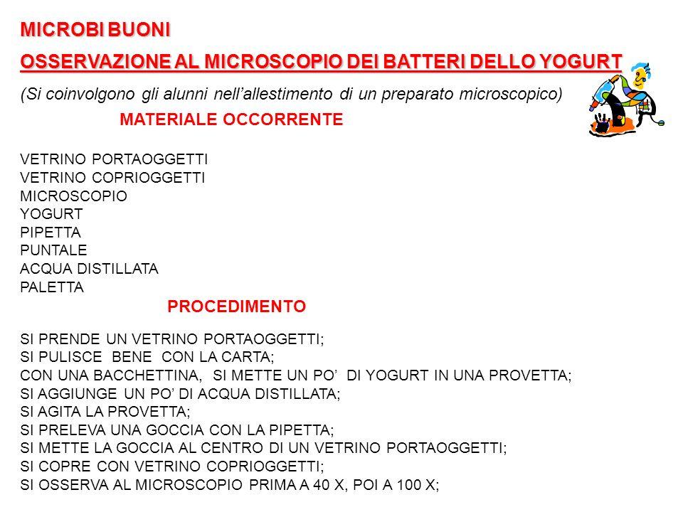 OSSERVAZIONE AL MICROSCOPIO DEI BATTERI DELLO YOGURT