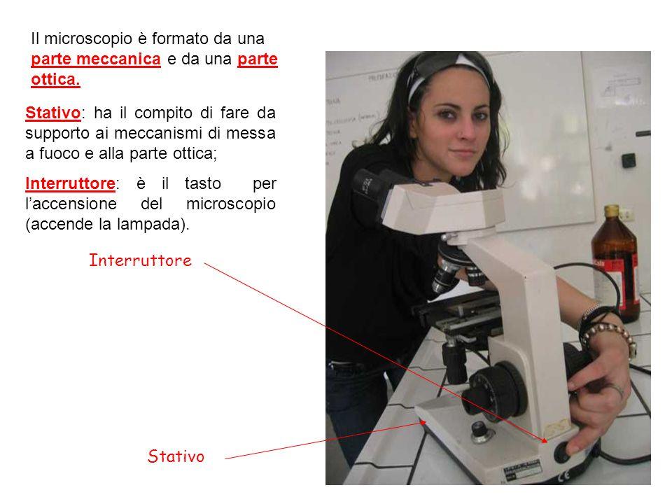 Il microscopio è formato da una parte meccanica e da una parte ottica.