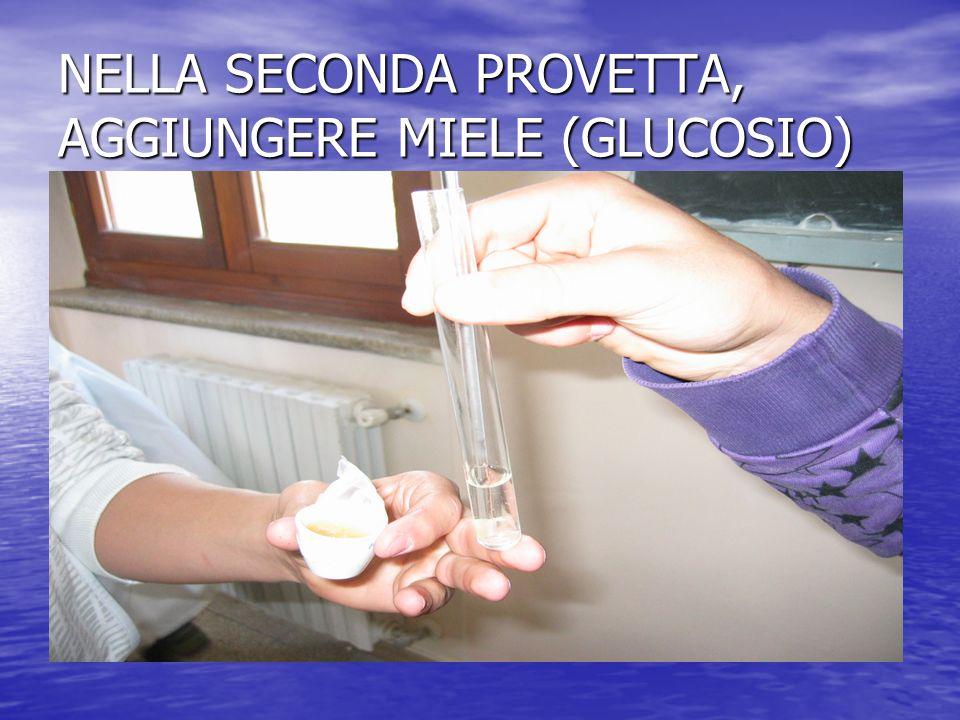 NELLA SECONDA PROVETTA, AGGIUNGERE MIELE (GLUCOSIO)