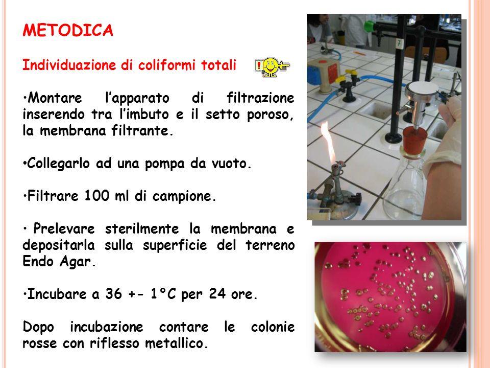 METODICA Individuazione di coliformi totali
