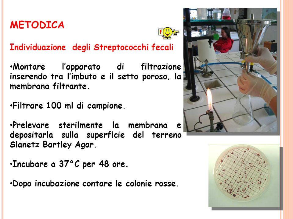METODICA Individuazione degli Streptococchi fecali