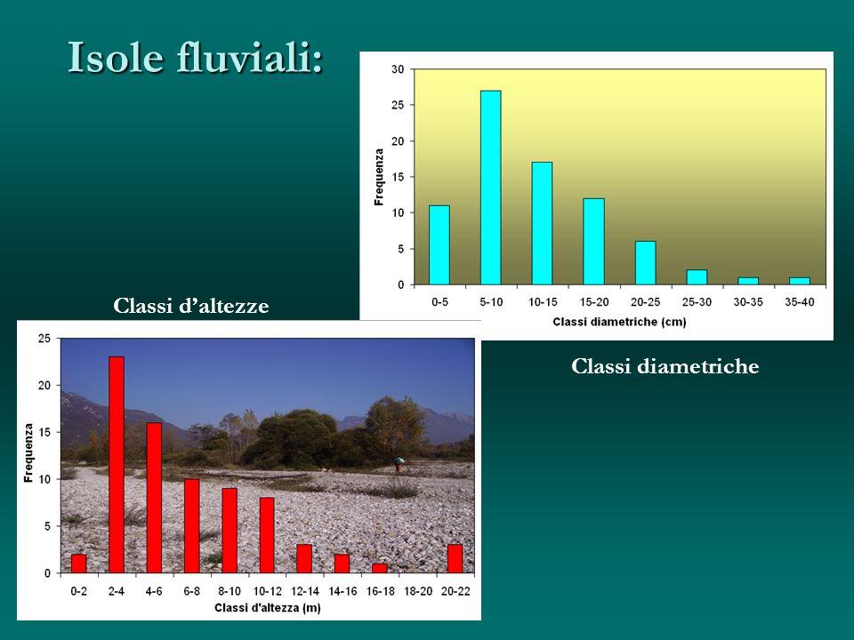 Isole fluviali: Classi d'altezze cm Classi diametriche