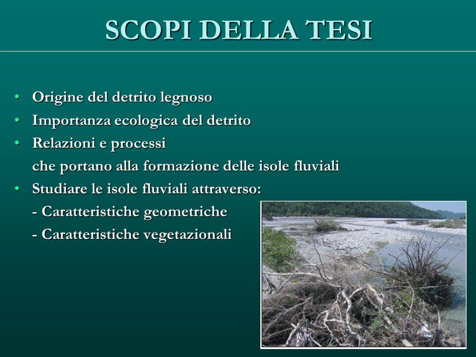 SCOPI DELLA TESI Origine del detrito legnoso