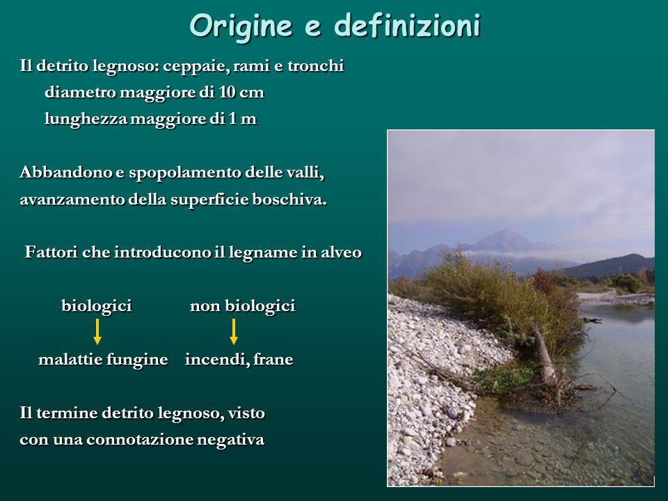 Origine e definizioni Il detrito legnoso: ceppaie, rami e tronchi
