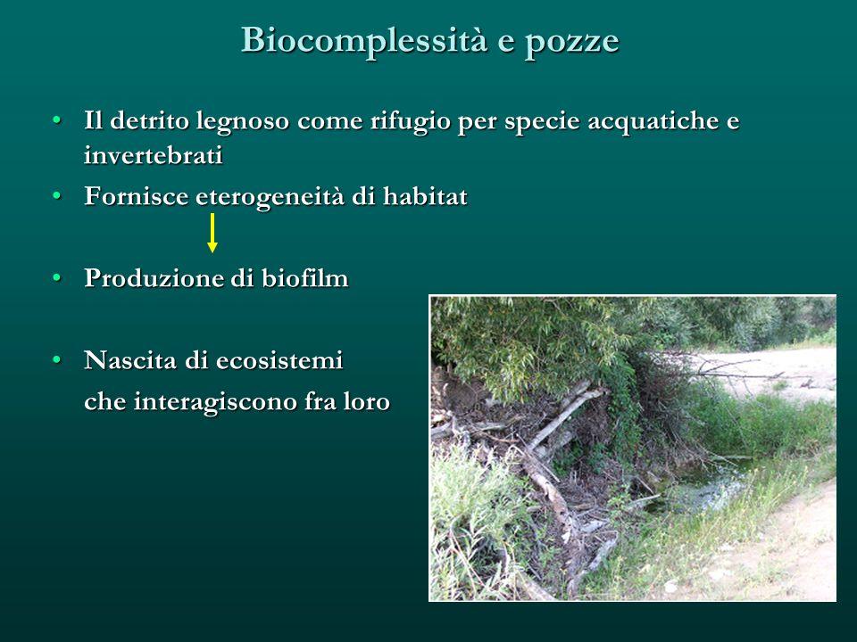 Biocomplessità e pozze